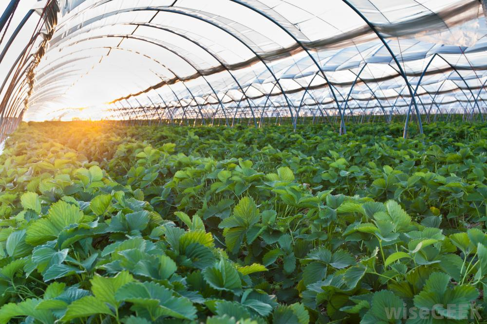the secret of agricultural success in the Netherlands