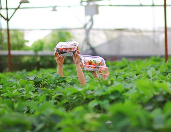 The necessity of organic farming