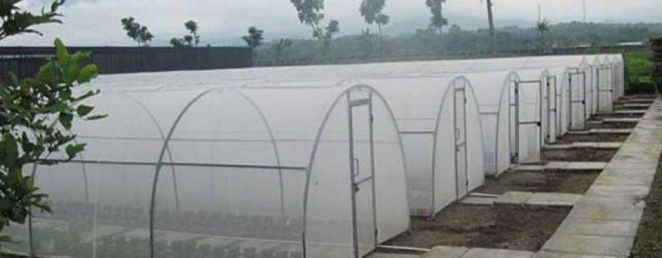 گلخانه های تونلی
