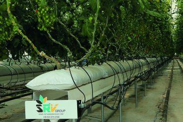 بسترهای کشت بدون خاک (soilless culture)