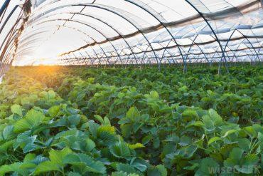 راز موفقیت کشاورزی در هلند چیست ؟