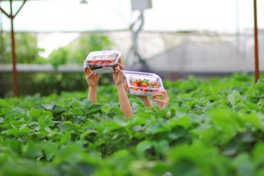 ضرورت کشاورزی ارگانیک